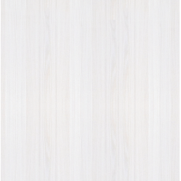 Sosna Biała Greko